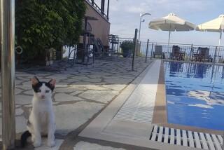 gallert semiramis hotel pool
